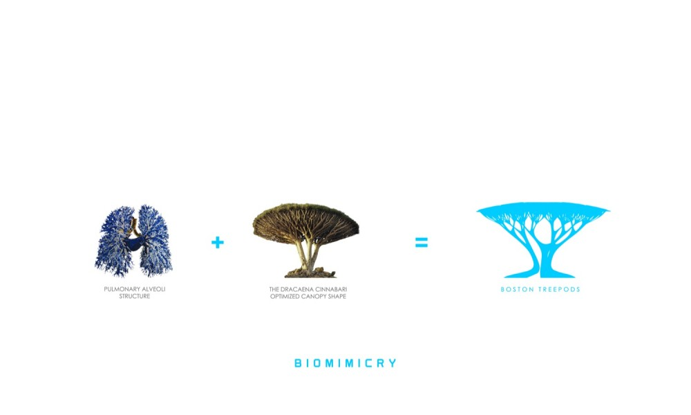 Working Biomimicry Architecture In Transformation